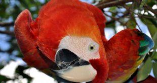 Тысячу лет назад жители Нью-Мексико разводили в неволе попугаев